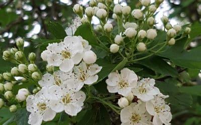 Au printemps, dans le jardin de l'Institut…